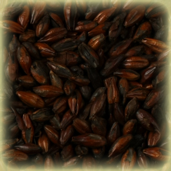 Castle Black Malted Barley